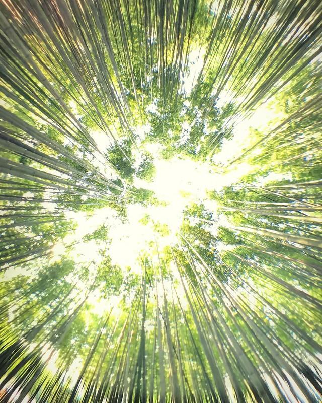 Lạc lối giữa mê cung xanh mướt của rừng tre Sagano: Nơi chứa đựng những âm thanh tinh túy cả Nhật Bản đều muốn bảo tồn - Ảnh 12.