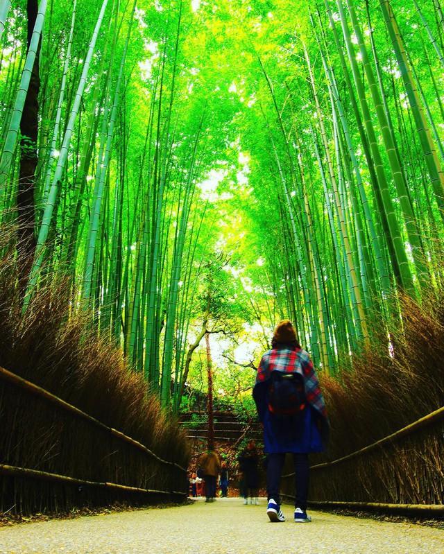 Lạc lối giữa mê cung xanh mướt của rừng tre Sagano: Nơi chứa đựng những âm thanh tinh túy cả Nhật Bản đều muốn bảo tồn - Ảnh 6.