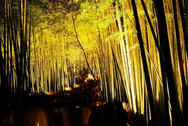 Lạc lối giữa mê cung xanh mướt của rừng tre Sagano: Nơi chứa đựng những âm thanh tinh túy cả Nhật Bản đều muốn bảo tồn - Ảnh 17.