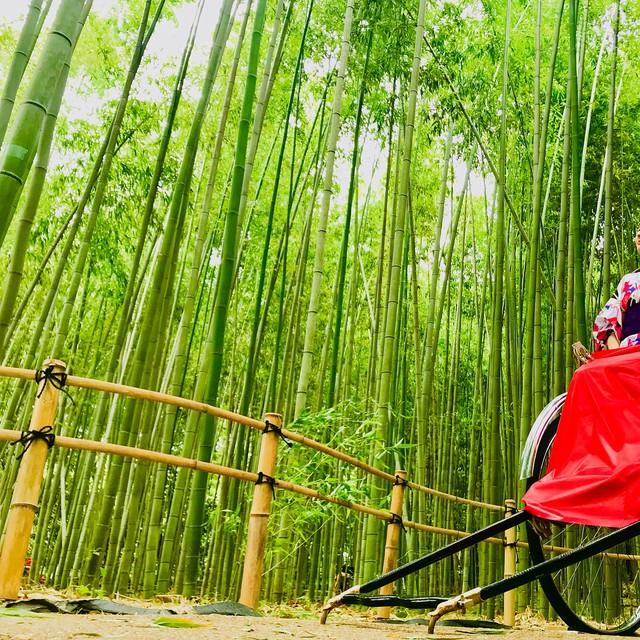 Lạc lối giữa mê cung xanh mướt của rừng tre Sagano: Nơi chứa đựng những âm thanh tinh túy cả Nhật Bản đều muốn bảo tồn - Ảnh 10.