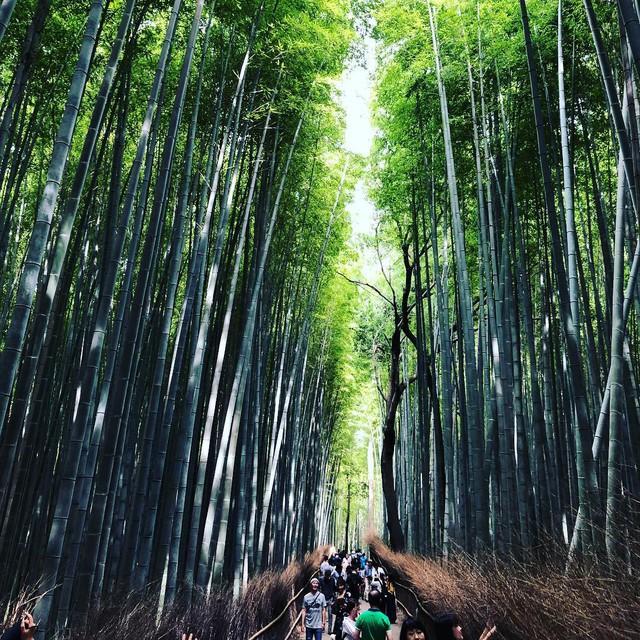 Lạc lối giữa mê cung xanh mướt của rừng tre Sagano: Nơi chứa đựng những âm thanh tinh túy cả Nhật Bản đều muốn bảo tồn - Ảnh 8.