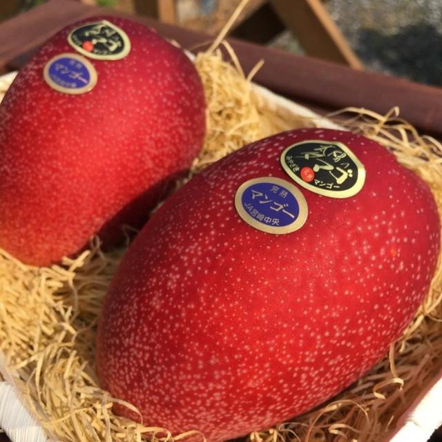 Những loại trái cây giá trên trời, gấp cả trăm lần quả vải thiều Shintomi 240.000 đồng/quả, có loại cả trăm triệu đồng - Ảnh 4.