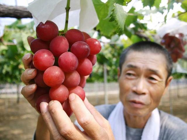Những loại trái cây giá trên trời, gấp cả trăm lần quả vải thiều Shintomi 240.000 đồng/quả, có loại cả trăm triệu đồng - Ảnh 10.