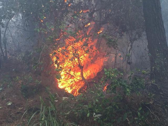 Toàn cảnh vụ cháy rừng thông lớn nhất Hà Tĩnh, di dời tài sản cả trăm hộ dân - Ảnh 2.
