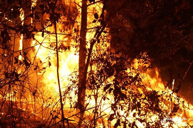 Rừng tiếp tục bùng cháy tại Nghệ An và Hà Tĩnh - Ảnh 1.