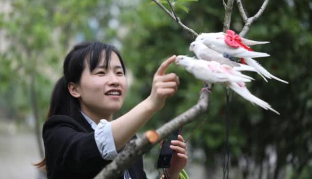 Cô gái 9x kiếm cả trăm triệu hàng tháng nhờ làm bỉm cho chim, xuất khẩu đi cả Mỹ, Canada, Ả Rập - Ảnh 2.