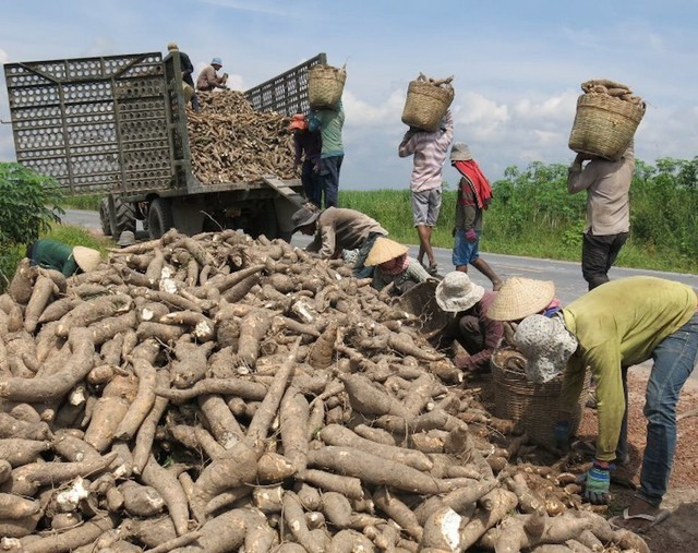 Trung Quốc dựng rào siết chặt, thế mạnh tỷ USD Việt Nam lao đao - Ảnh 1.