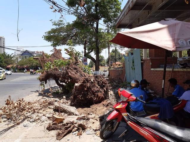 Nhóm người lạ triệt hạ cây cổ thụ ngay giữa trung tâm Đà Nẵng - Ảnh 1.