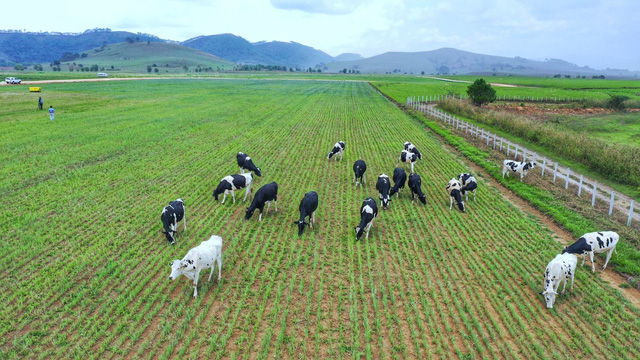 """Xây tổ hợp """"Resort"""" bò sữa Organic 5.000 ha tại Lào: Vinamilk giữ đúng cam kết sẽ chinh phục thì trường cao cấp quốc tế - Ảnh 3."""