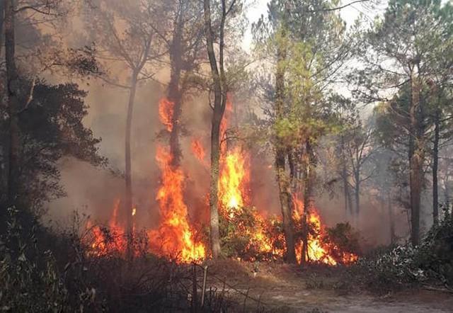 Bắt giam người đàn ông gây vụ cháy rừng lớn nhất Hà Tĩnh suốt 4 ngày - Ảnh 2.