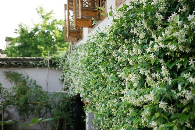 Cặp vợ chồng lập trình viên từ chối mua nhà ở thành phố, về quê xây nhà nhỏ bên khoảng sân vườn trồng rau và hoa mỗi ngày - Ảnh 8.