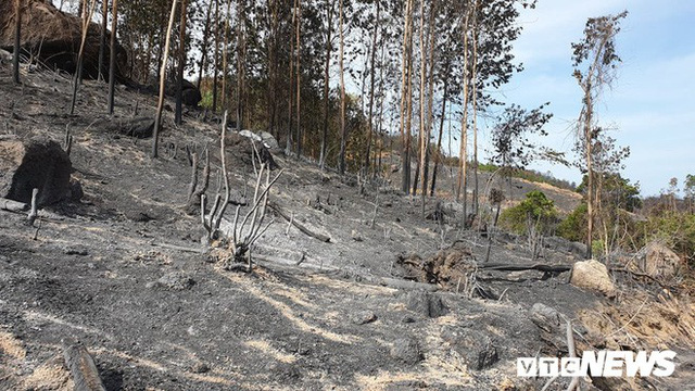 Ảnh: Xót xa rừng Quảng Nam chìm trong biển lửa suốt 22 tiếng, 107 ha keo bị thiêu rụi - Ảnh 1.