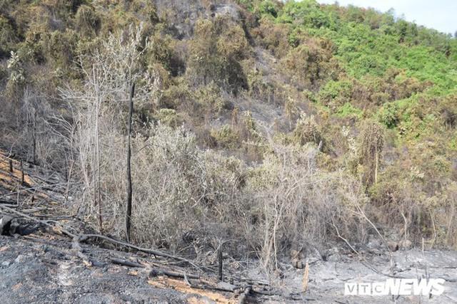 Ảnh: Xót xa rừng Quảng Nam chìm trong biển lửa suốt 22 tiếng, 107 ha keo bị thiêu rụi - Ảnh 2.