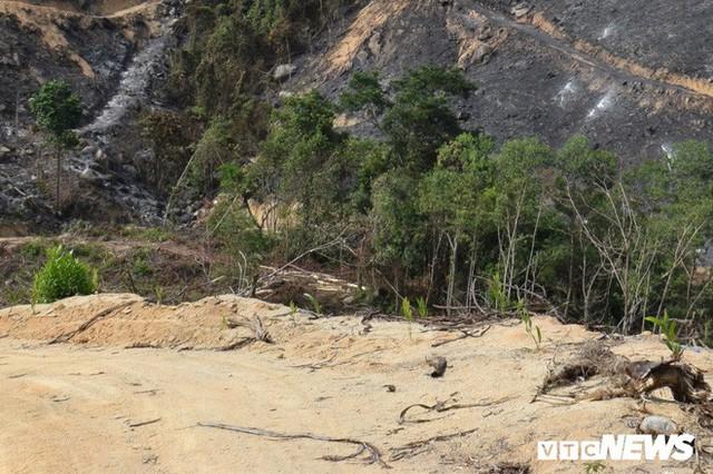 Ảnh: Xót xa rừng Quảng Nam chìm trong biển lửa suốt 22 tiếng, 107 ha keo bị thiêu rụi - Ảnh 6.