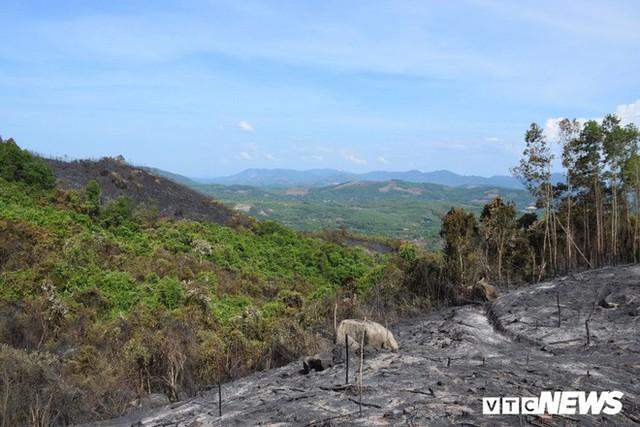 Ảnh: Xót xa rừng Quảng Nam chìm trong biển lửa suốt 22 tiếng, 107 ha keo bị thiêu rụi - Ảnh 7.