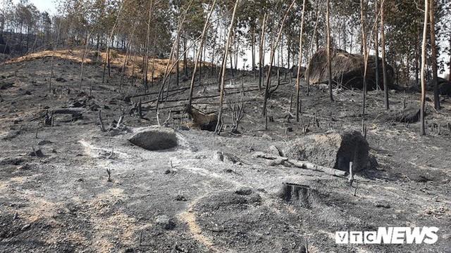 Ảnh: Xót xa rừng Quảng Nam chìm trong biển lửa suốt 22 tiếng, 107 ha keo bị thiêu rụi - Ảnh 8.