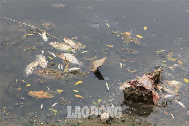 Nước sông Tô Lịch đen trở lại, xuất hiện cá chết trắng nổi lềnh bềnh - Ảnh 3.