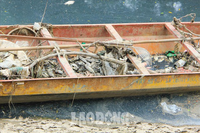 Nước sông Tô Lịch đen trở lại, xuất hiện cá chết trắng nổi lềnh bềnh - Ảnh 7.