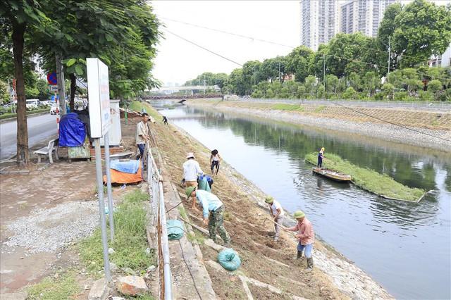 Hành trình phủ xanh cỏ lá tre trên kè sông Tô Lịch - Ảnh 1.
