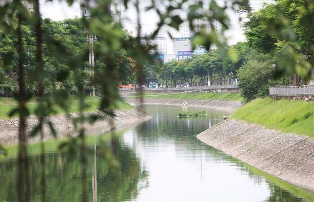 Hành trình phủ xanh cỏ lá tre trên kè sông Tô Lịch - Ảnh 11.