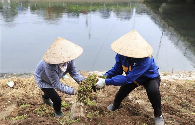Hành trình phủ xanh cỏ lá tre trên kè sông Tô Lịch - Ảnh 6.