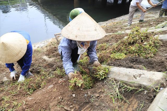 Hành trình phủ xanh cỏ lá tre trên kè sông Tô Lịch - Ảnh 7.