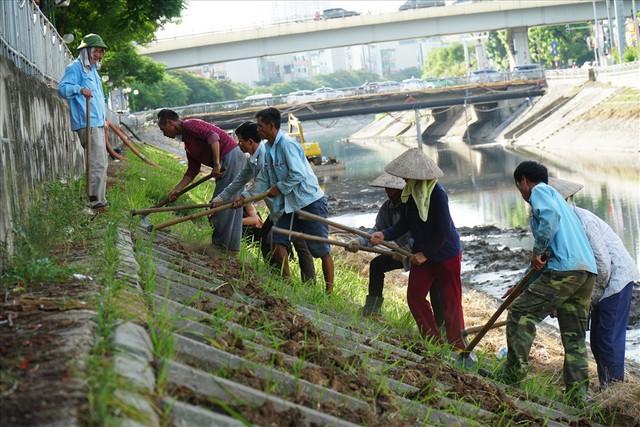 Hành trình phủ xanh cỏ lá tre trên kè sông Tô Lịch - Ảnh 10.
