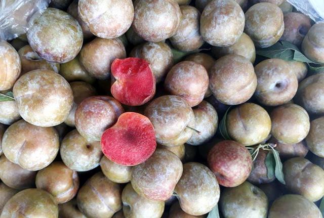 Lừa bán đặc sản Sa Pa, dân Việt ăn hết 3.000 tấn mận Tàu - Ảnh 2.