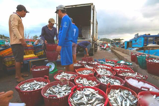 Mãn nhãn tại cảng cá lâu đời ở đảo ngọc Phú Quốc - Ảnh 11.