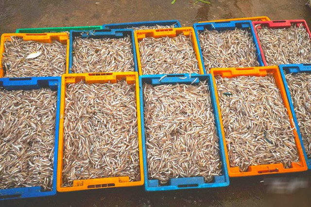 Mãn nhãn tại cảng cá lâu đời ở đảo ngọc Phú Quốc - Ảnh 12.