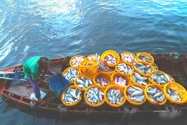 Mãn nhãn tại cảng cá lâu đời ở đảo ngọc Phú Quốc - Ảnh 3.