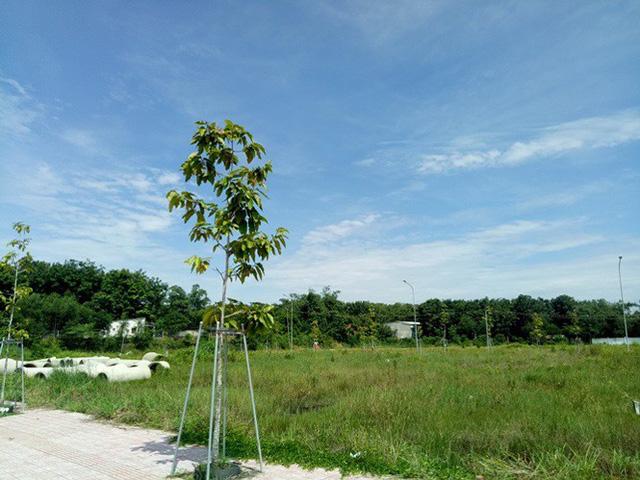 Vụ 'xẻ 7.000 m2 đất công phân lô bán nền: Ngưng mọi hoạt động giao dịch - Ảnh 3.