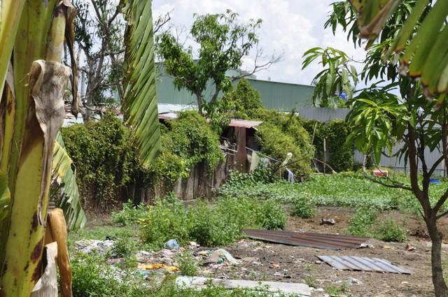Ảnh: Hàng trăm công trình trái phép mọc trên đất nông nghiệp ở ngoại ô TP.HCM - Ảnh 12.