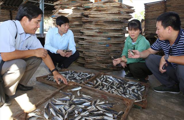 Vì sao hơn 1.000 tấn cá khô xuất khẩu ở Quảng Trị bị ùn ứ? - Ảnh 2.