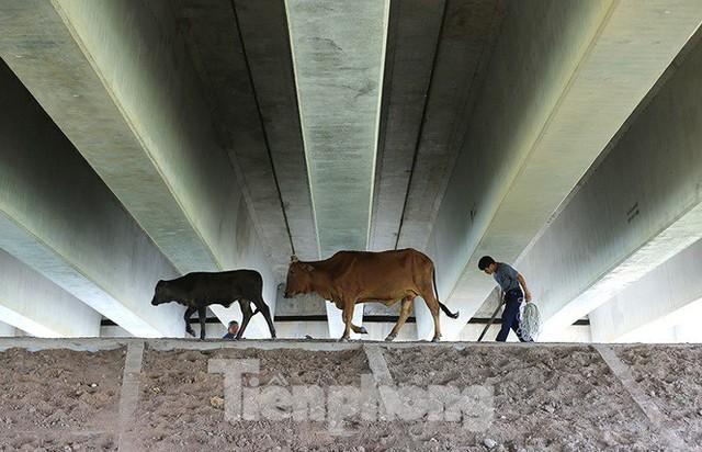 Cận cảnh cầu Hưng Hà và tuyến đường nối hai cao tốc lớn - Ảnh 6.