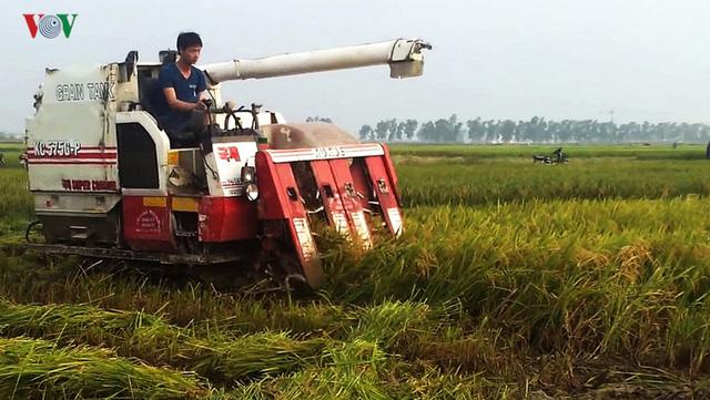 Giá lúa tăng, nhưng nông dân Trà Vinh vẫn lãi ít, vì năng suất kém - Ảnh 1.