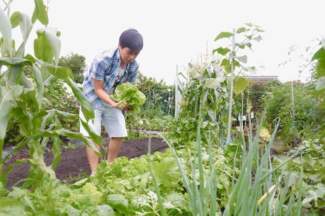 Gia đình Việt ở Nhật: Ông bố kỹ sư dành thời gian thuê đất, phủ kín bằng rau quả sạch cho vợ con thỏa nỗi nhớ quê hương  - Ảnh 2.