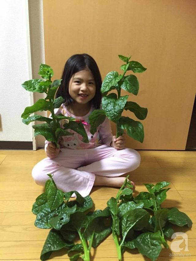 Gia đình Việt ở Nhật: Ông bố kỹ sư dành thời gian thuê đất, phủ kín bằng rau quả sạch cho vợ con thỏa nỗi nhớ quê hương  - Ảnh 21.