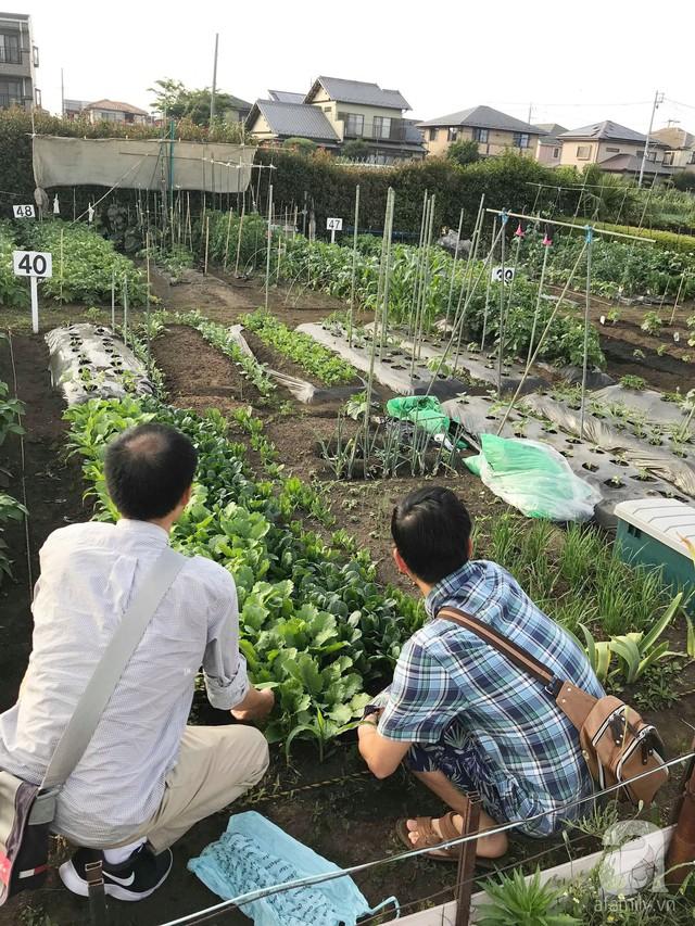 Gia đình Việt ở Nhật: Ông bố kỹ sư dành thời gian thuê đất, phủ kín bằng rau quả sạch cho vợ con thỏa nỗi nhớ quê hương  - Ảnh 22.