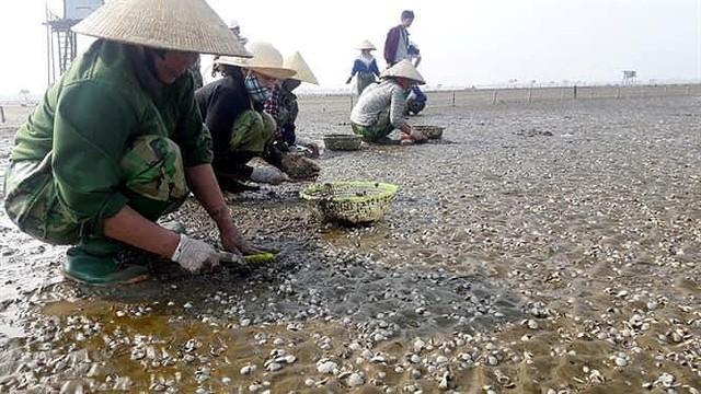 Sau bão số 3, ngao chết nổi trắng biển Thái Bình - Ảnh 1.