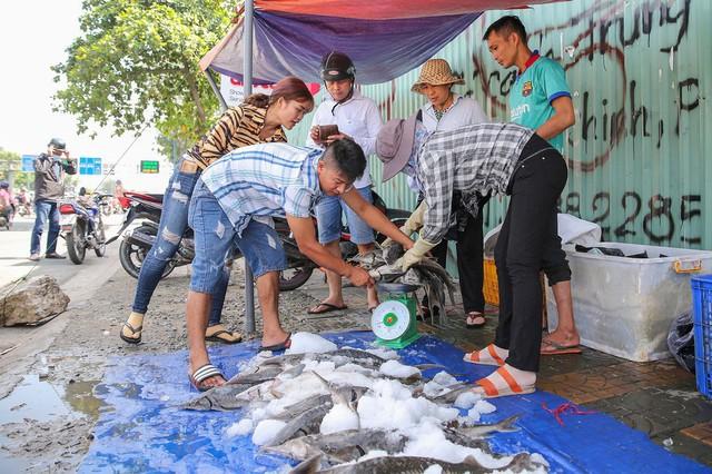 Người dân TP HCM chen nhau mua cá tầm bị ngộp nước - ảnh 13