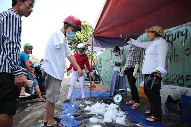Người dân TP HCM chen nhau mua cá tầm bị ngộp nước - ảnh 5