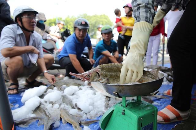 Người dân TP HCM chen nhau mua cá tầm bị ngộp nước - ảnh 7