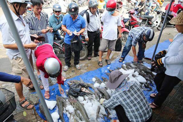 Người dân TP HCM chen nhau mua cá tầm bị ngộp nước - ảnh 9