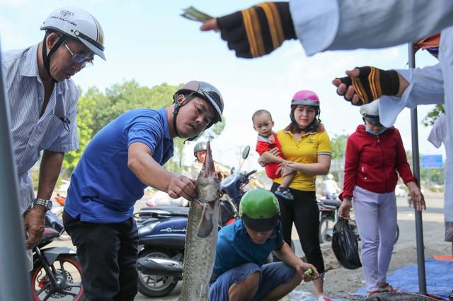 Người dân TP HCM chen nhau mua cá tầm bị ngộp nước - ảnh 10