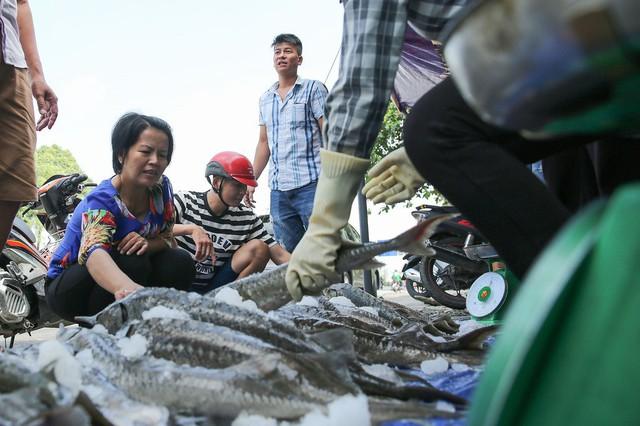 Người dân TP HCM chen nhau mua cá tầm bị ngộp nước - ảnh 11