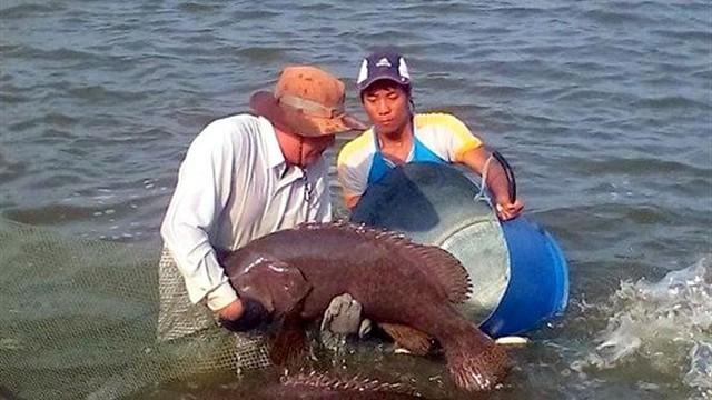 Lai tạo thành công cá song vua mang lại hiệu quả kinh tế cao - Ảnh 1.