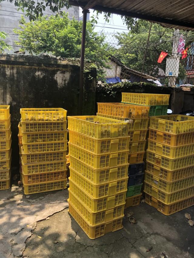 Ngăn chặn hơn 8.000 con gà con giống nhập lậu từ Trung Quốc  - Ảnh 1.