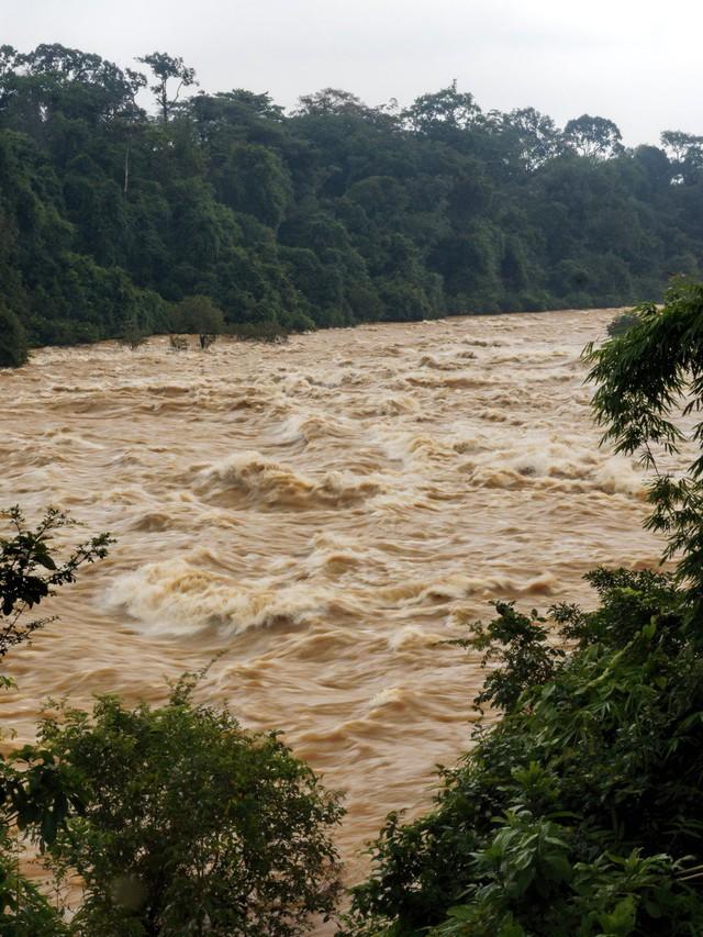 Báo quốc tế nói gì về vườn quốc gia Cát Tiên? - Ảnh 1.