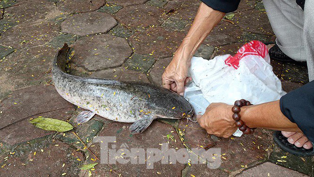Nước sông Tô Lịch trong veo sau bão, cần thủ thỏa sức buông câu bắt cá - Ảnh 15.